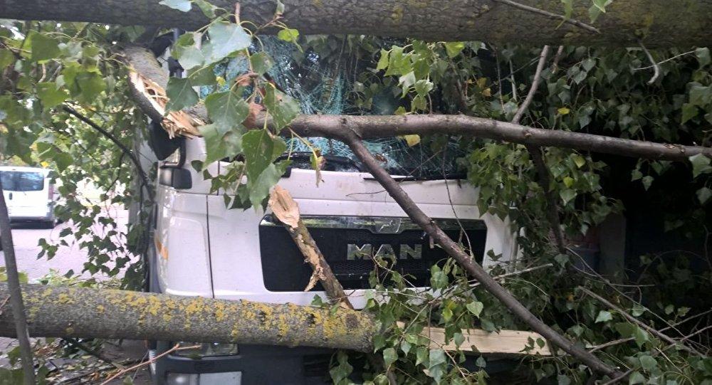 ГАИ рекомендует не ставить машины под деревьями