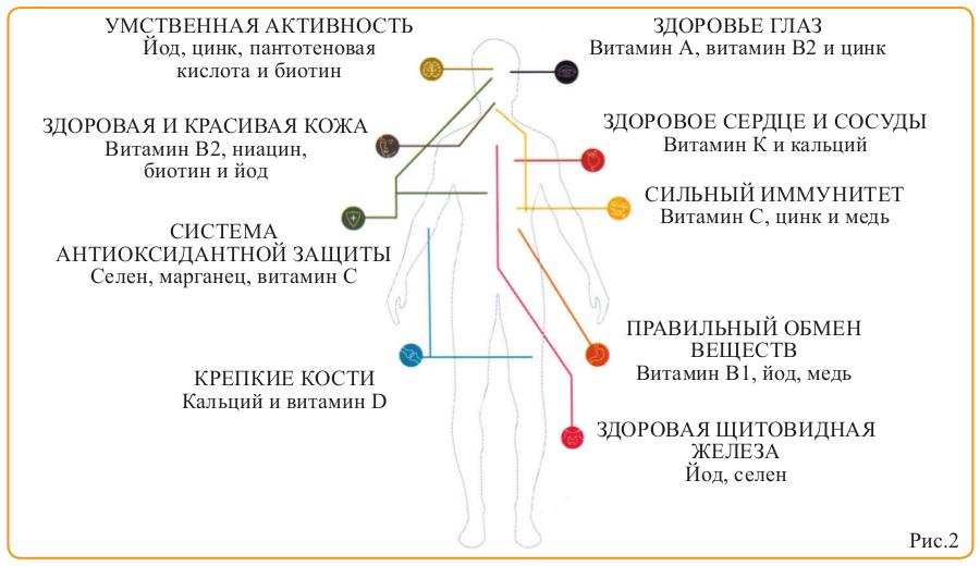 Антиоксиданты на страже организма (рис. 2)