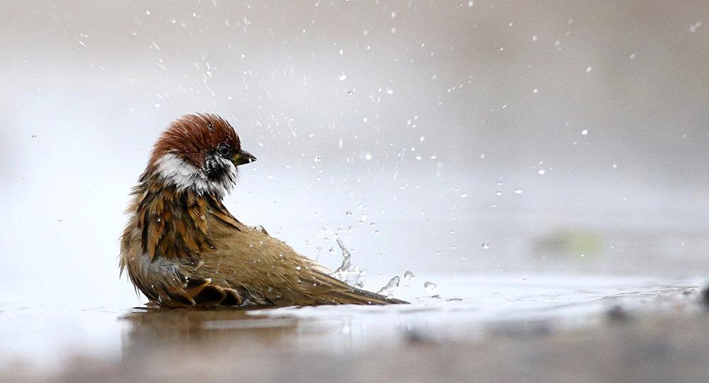 В Беларусь идет потепление, вернется осень
