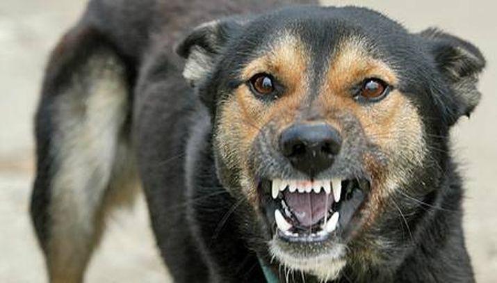 Гомельская область в лидерах по количеству случаев бешенства у животных. как уберечься от смертельного вируса?