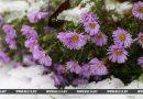 Снег ожидается 21 марта по юго-востоку Беларуси