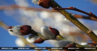 В Беларуси ввыходные немного потеплеет