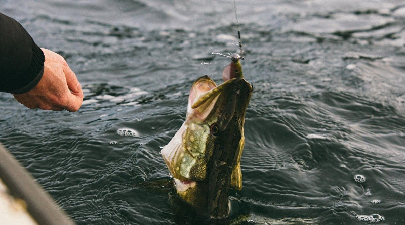 Не ловись, рыбка: за вылов щук в период запрета грозит штраф
