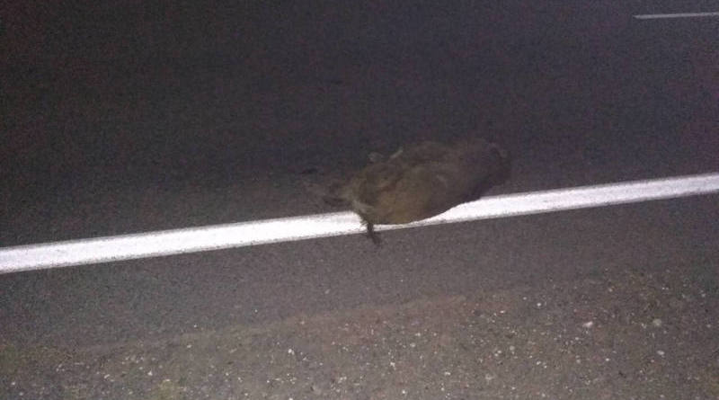 В Речицком районе из-за наезда на туши диких животных случилось ДТП