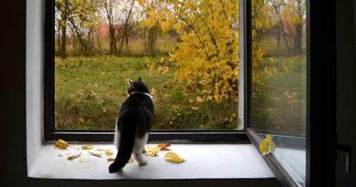 Осеннее равноденствие: начало астрономической осени