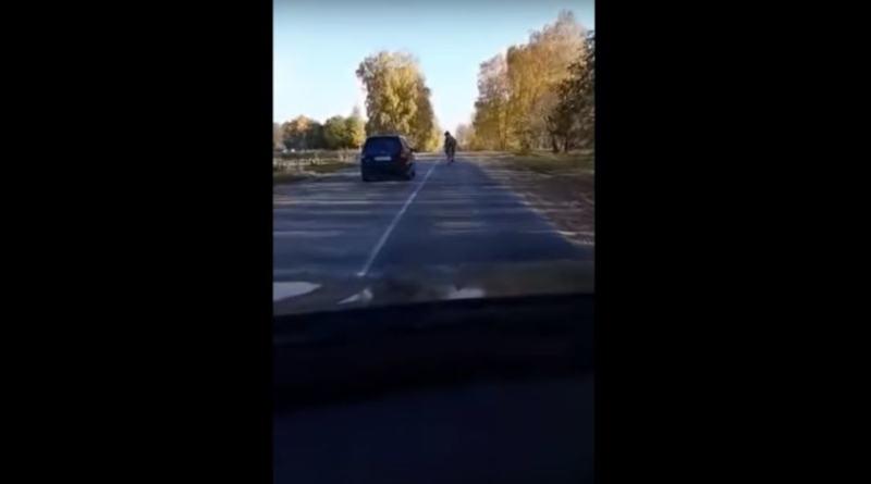 Верблюд на дороге под Минском озадачил водителей – видео