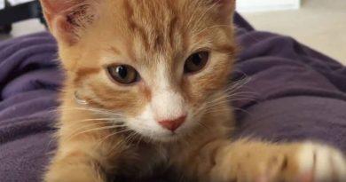 Эти мурлычущие котята поднимут настроение любому — видео