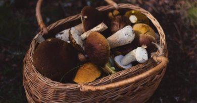 Отравление грибами: симптомы ипервая помощь
