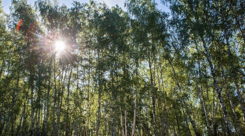 Лето близко: на следующей неделе вБеларуси будет до 26 градусов тепла