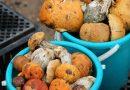 Опытные грибники — оприметах, которые помогут набрать полную корзину