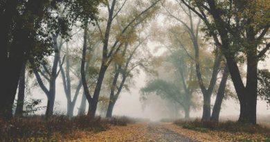 Осторожно, туман: желтый уровень опасности объявили вБеларуси на 23 октября